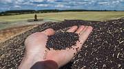 Куплю зерновідходи соняшника, зерновідходи ріпаку Черкаси