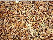 Куплю отходы зерновые, отходы масличные, отходы бобовые! Харьков