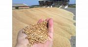 Зерноотход куплю. Закупаю зерновые, масличные, бобовые отходы! Полтава