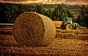 Продаємо суміш насіння кормових трав для пасовищ і сінокосів Чернигов