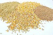 Куплю зерновідходи олійних, бобових, зернових культур Днепр